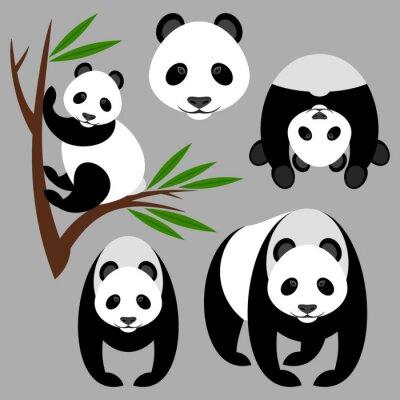 Carta da parati Panda
