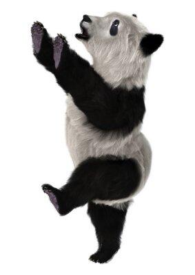 Carta da parati Panda Bear Cub