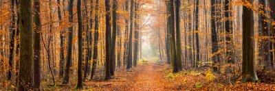 Carta da parati panorama Foresta in autunno