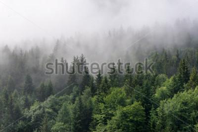Carta da parati Panoramica foresta semperverde - Cime di alberi verdi alti con fitta nebbia che si riversa in una lussureggiante natura selvaggia