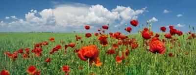 Carta da parati Papaveri rossi e cielo con nuvole