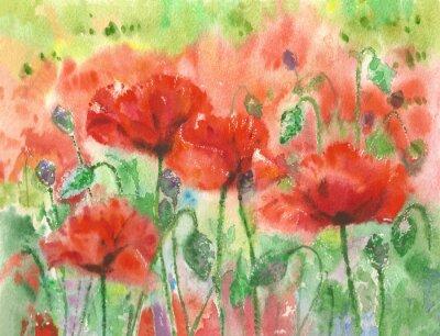 Carta da parati papaveri rossi fiori sfondo, acquerello.