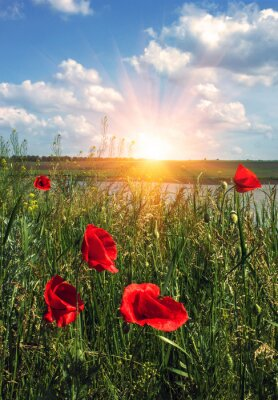 Carta da parati Papaveri selvatici all'alba nel campo con le nubi