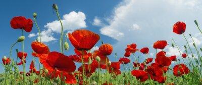 Carta da parati papavero rosso e nuvole