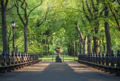 Carta da parati Parco centrale. Immagine dell'area del centro commerciale a Central Park, New York City, Stati Uniti d'America