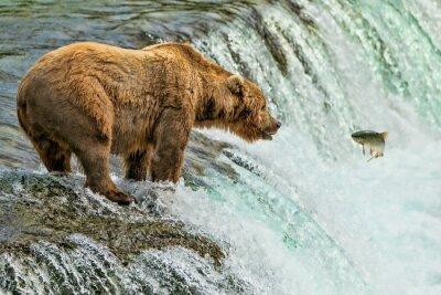 Carta da parati Parco Nazionale di Grizzly Bear Katmai Alaska