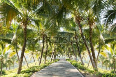 Carta da parati Passaggio pedonale con albero di cocco nel giardino