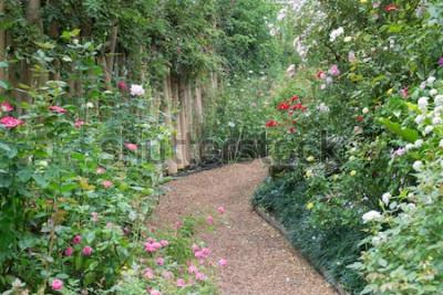 Carta da parati Passaggio pedonale in roseto botanico, foto di riserva
