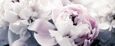Carta da parati Pastel peony flowers as floral art background, botanical flatlay and luxury branding design