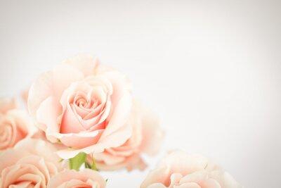 Carta da parati Peach rose cluster  with vignette