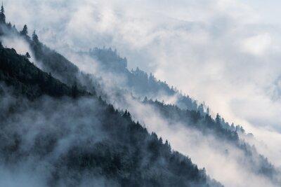 Carta da parati Pendio di montagna boscosa in nebbia bassa valle sdraiata con sagome di conifere sempreverdi avvolte nella nebbia.