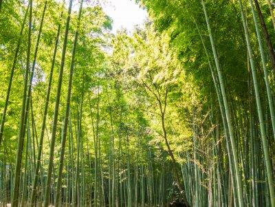 Carta da parati percorso di bambù