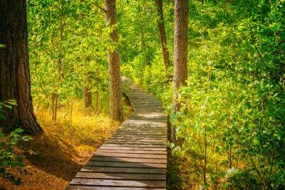 Carta da parati Percorso in legno nella foresta