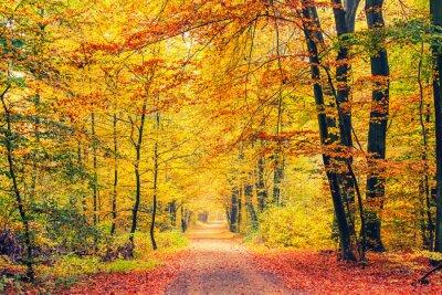Carta da parati Percorso nella foresta di autunno
