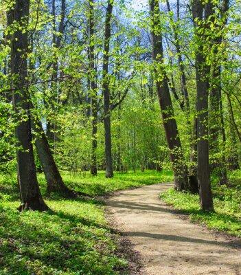 Carta da parati percorso vuoto al parco di primavera