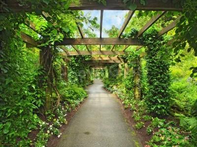 Carta da parati Pergola passaggio nel giardino, circondato da glicine e piante rampicanti