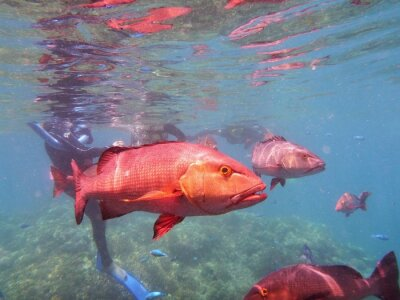 Carta da parati Pesce Grande barriera corallina