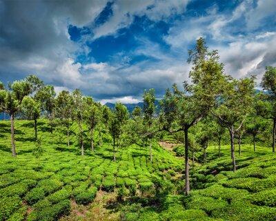Carta da parati Piantagioni di tè in montagna