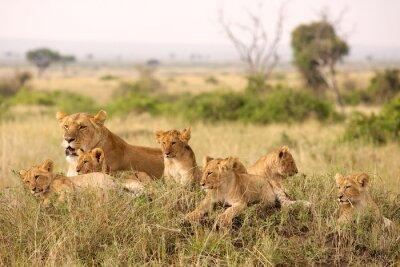 Carta da parati Piccoli cuccioli di leone di relax