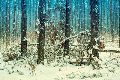 Carta da parati pineta Foggy coperti di prima neve