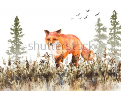 Carta da parati Pittura ad acquerello Illustrazione animale disegnato a mano. Volpe rossa che cammina sul prato sbiadito. Scena di autunno con movimento selvaggio predatore, abeti in nebbia ed erba secca.
