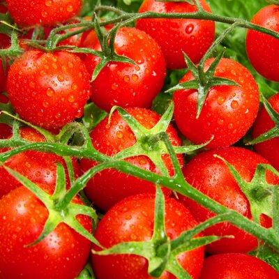 Carta da parati pomodori rossi