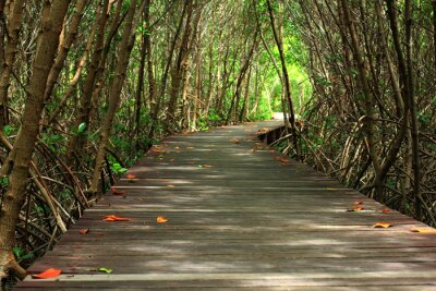 Carta da parati ponte di legno in foresta