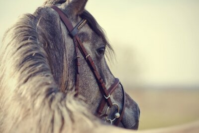 Carta da parati Portrait of a sports stallion