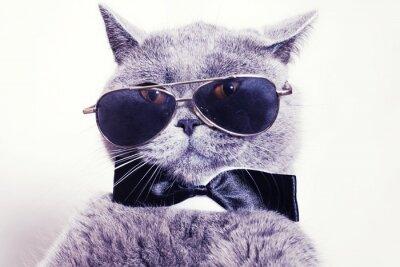 Carta da parati Portrait of British shorthair gray cat wearing sunglasses