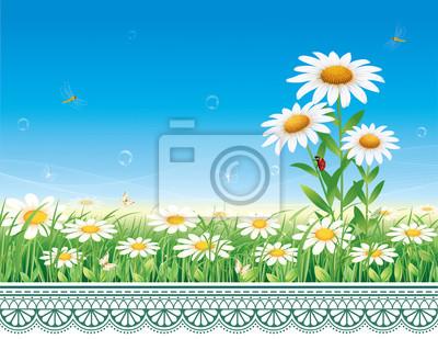 Prato di fiori con margherite su uno sfondo di una illustrazione ...