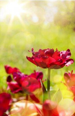 Carta da parati primavera arte floreale