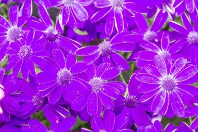 Primavera In Fiore Sfondo Di Fiore Carta Da Parati Carte Da Parati