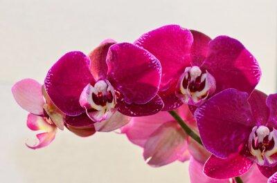 Carta da parati Primo piano orchide viola