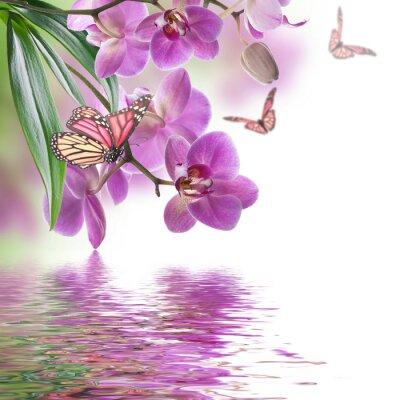 Carta da parati Priorità bassa floreale di orchidee tropicali e farfalla