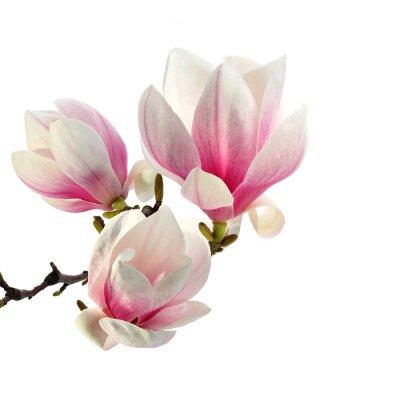 Carta da parati profumo di magnolia