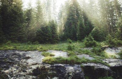 Carta da parati raggi del sole attraverso gli alberi di pino al mattino