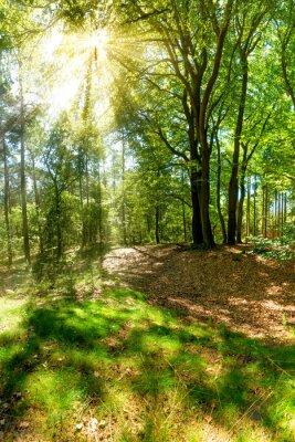 Carta da parati Raggi sole di rottura attraverso le cime degli alberi nella foresta