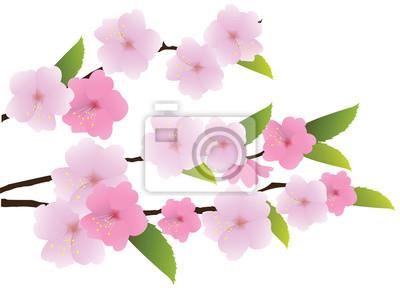 Carta Da Parati Fiori Di Ciliegio : Rami di fiori di vettore di ciliegio carta da parati u carte da