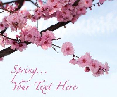Carta Da Parati Fiori Di Ciliegio : Ramo di fiori di ciliegio giapponese carta da parati u carte da