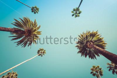 Carta da parati Redeo Los Angeles Vintge Vintage Palm Trees - cielo sereno estivo
