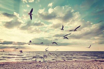 Carta da parati Retro stilizzata spiaggia con uccelli che volano al tramonto