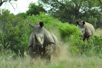 Carta da parati ricarica Rhino