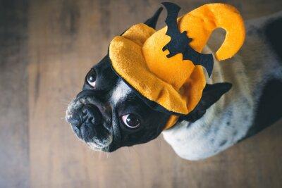 Carta da parati Ritratto di Bulldog francese con il cappello di Halloween