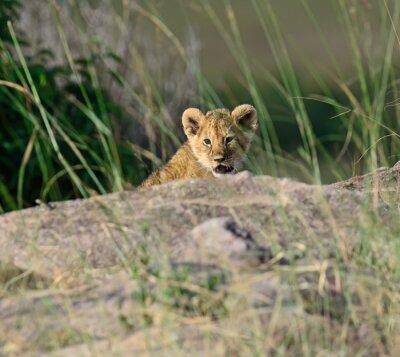 Carta da parati Ritratto di leone africano