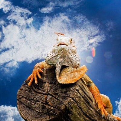 Carta da parati ritratto di macro colpo sulla testa iguana