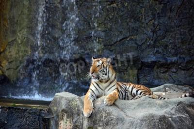 Carta da parati Ritratto di tigre