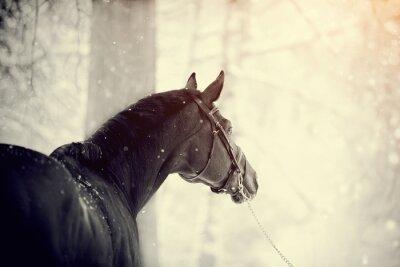 Carta da parati Ritratto di un cavallo sportivo