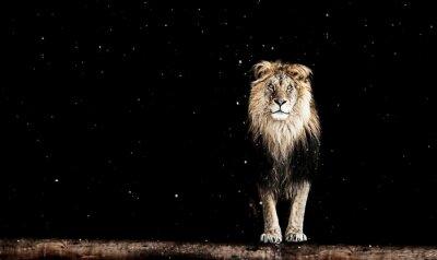 Carta da parati Ritratto di una bella leone, disegno geometrico