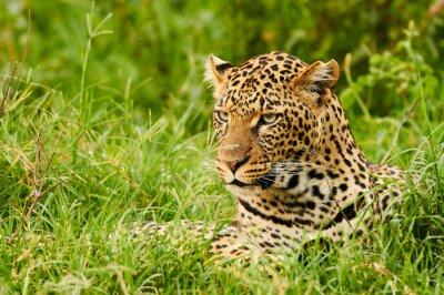 Carta da parati ritratto femmina di leopardo