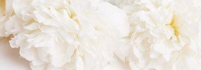 Carta da parati Romantic banner, delicate white peonies flowers close-up. Fragrant pink petals